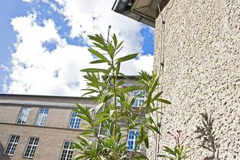 Pflanze im Innenhof Campus Treskowallee