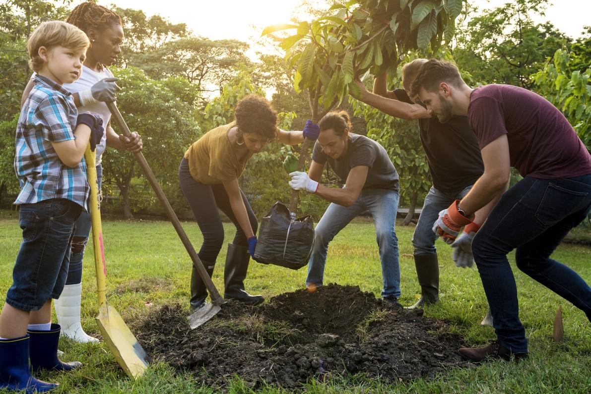 Gruppe von Menschen pflanzt einen Baum