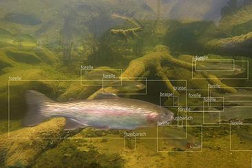Forelle oder Flussbarsch? Das Programm des Start-ups MonitorFish kann mit künstlicher Intelligenz Fischarten unterscheiden und bestimmte Parameter erfassen.