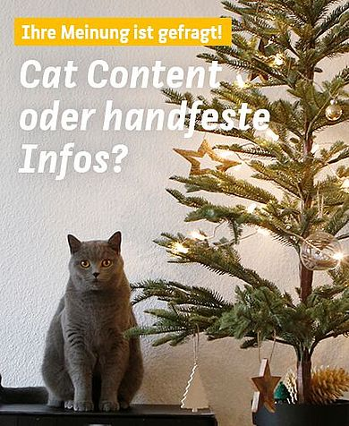 Cute cat content or useful information? Go to the HTW Berlin online communication survey