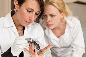 Zwei Studentinnen im Laborkittel betrachten etwas auf einer Glasplatte