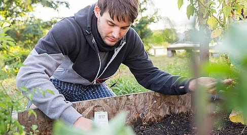 Student beim Pflanzen im Urban Garden